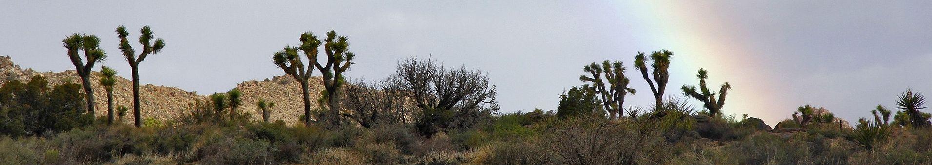 desert rain cropped